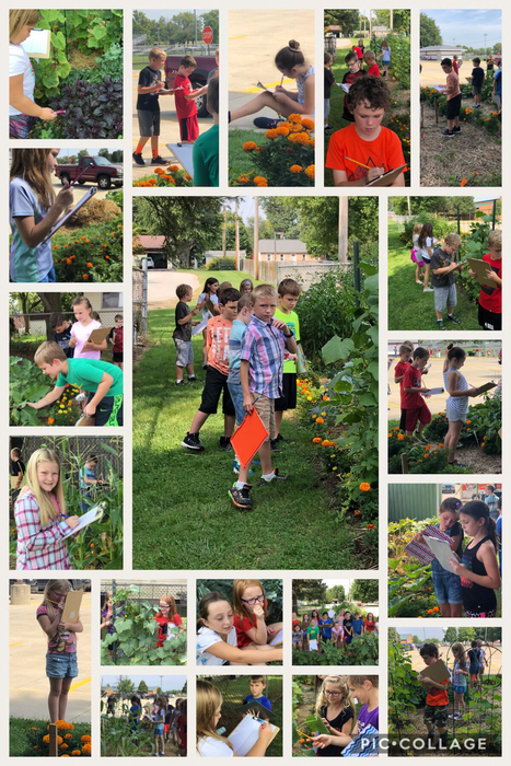 3rd grade visits the garden for a little inquiry.